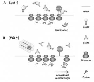 schemat związku białka